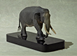 Elephas maximus   - 2